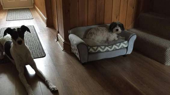 Free doggy couch!! used but still in a good shape